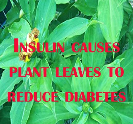 Insulin causes plant leaves to reduce diabetes